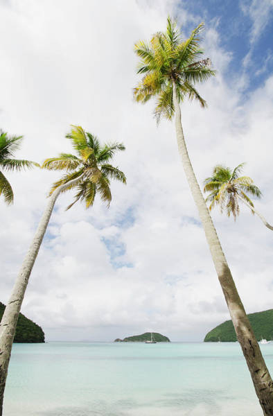 Hackett Photograph - Usa, Us Virgin Islands, St. John, Palm by Chris  Hackett