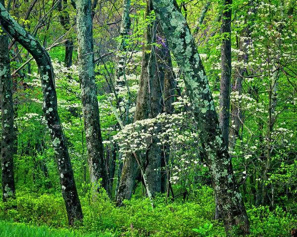 Green Jay Photograph - Usa, Virginia, Hazel Mountain Overlook by Jaynes Gallery