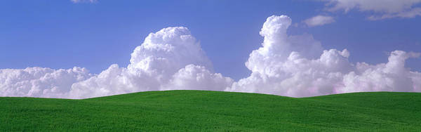 Wall Art - Photograph - Usa, Washington, Palouse, Wheat by Panoramic Images