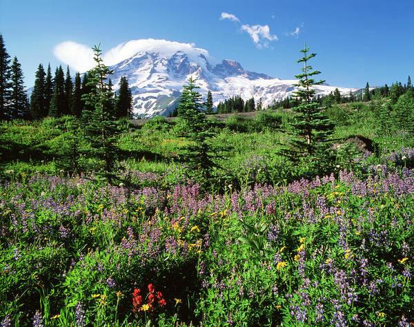 Mt. Adams Photograph - Usa, Washington State, Mt by Adam Jones