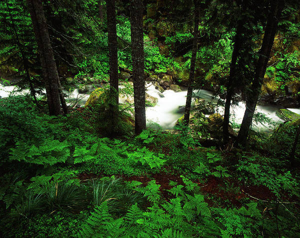 Mt. Adams Photograph - Usa, Washington State, Mt Rainier by Adam Jones