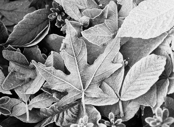 Arboretums Photograph - Usa, Washington State, Seattle by Stuart Westmorland