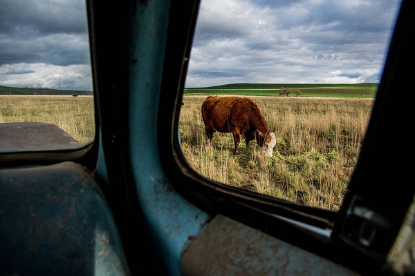 Bovine Photograph - Usa, Washington State, Whitman County by Alison Jones