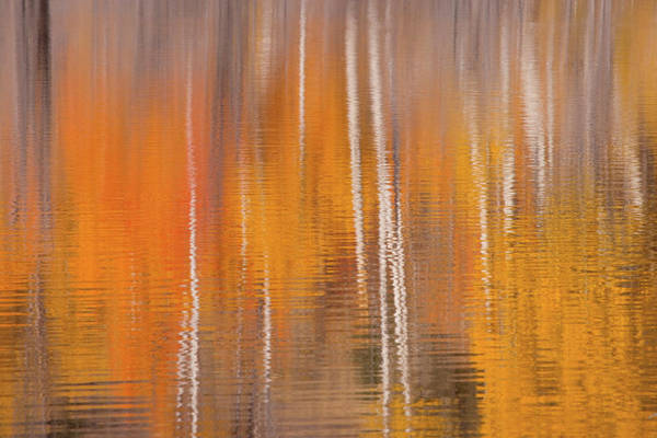 Beaver Pond Wall Art - Photograph - Usa, Washington State, Winthrop by Jaynes Gallery