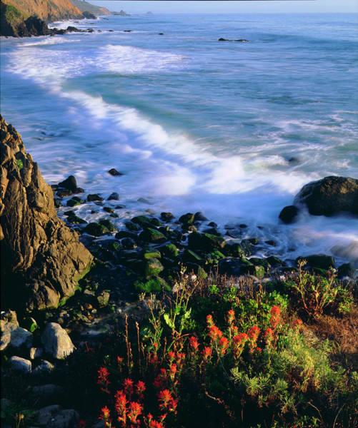 Abundant Wall Art - Photograph - Usa, Wildflowers Along The California by Jaynes Gallery