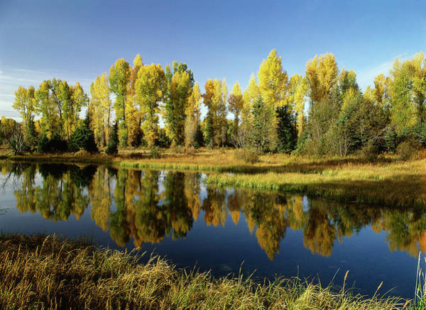 Beaver Pond Wall Art - Photograph - Usa, Wyoming, Grand Teton National by Stuart Westmorland