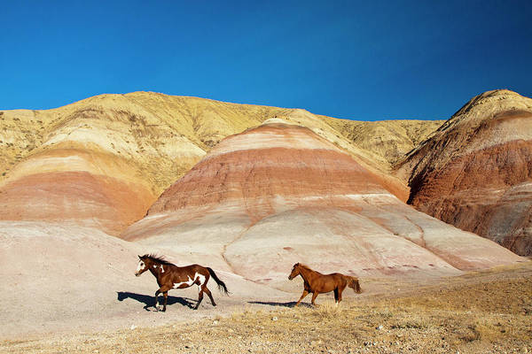 Away From It All Wall Art - Photograph - Usa, Wyoming, Shell, Heard Of Horses by Terry Eggers