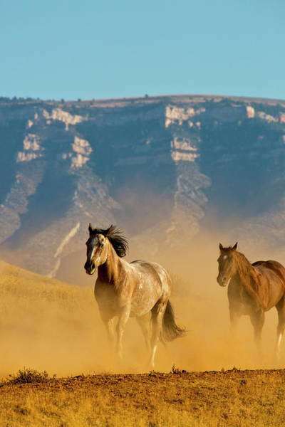 Away From It All Wall Art - Photograph - Usa, Wyoming, Shell, Horses Running by Terry Eggers