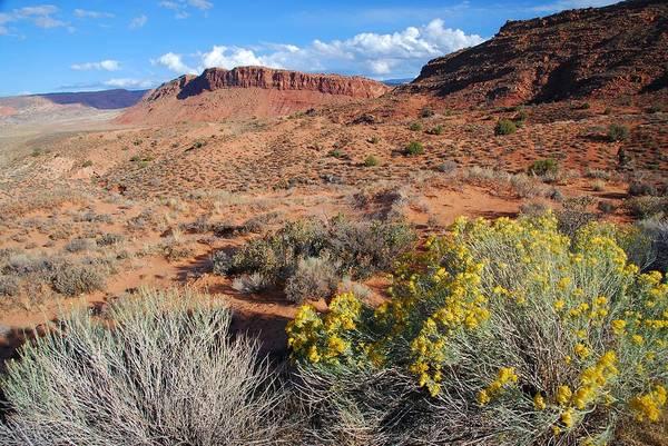 Photograph - Utah Desert Landscape by Cascade Colors
