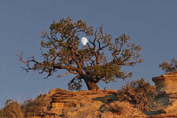 Photograph - Utah Moon At Sunset by Wes and Dotty Weber