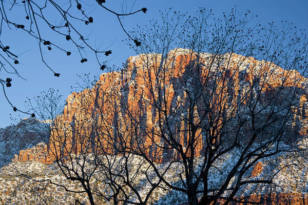 Utah Usa View Of The Watchman In Zion Art Print