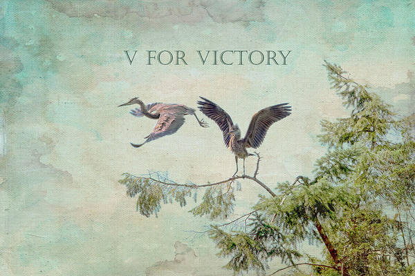 Photograph - V For Victory by Peggy Collins
