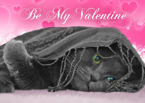 Photograph - Valentine Cat by Joann Vitali