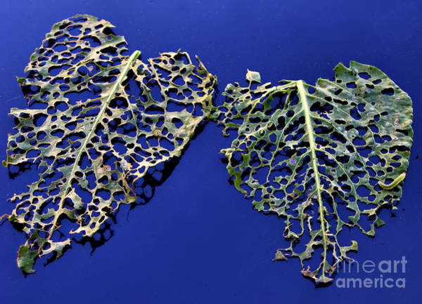 Photograph - Valentine - Hearts For Sale by Daliana Pacuraru
