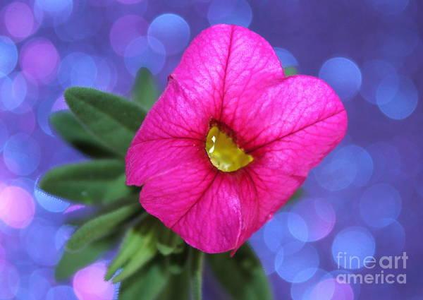 Petunias Photograph - Valentine by Krissy Katsimbras