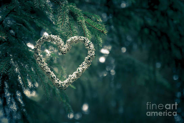 Valentine's Day In Nature Art Print