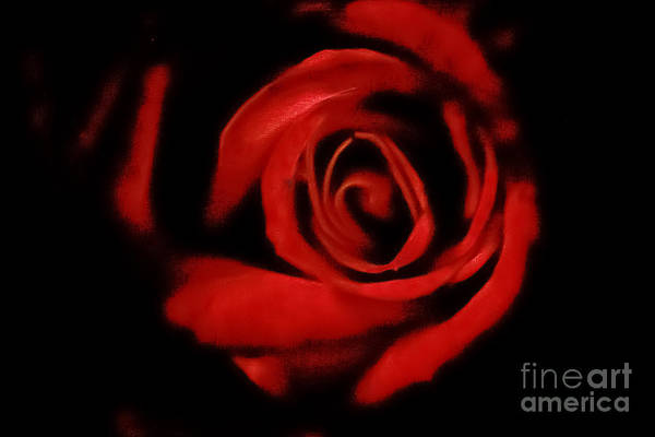 Photograph - Valentine's Rose by Kim Henderson