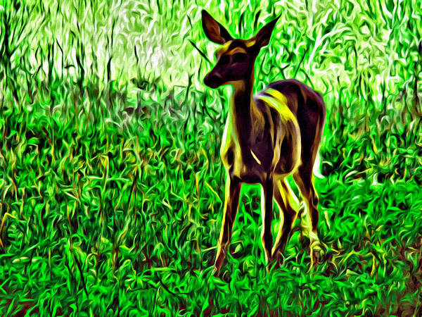 Photograph - Valley Forge Deer by Alice Gipson