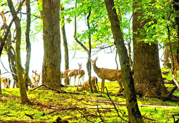 Digital Art - Valley Forge Deer by Rick Mosher