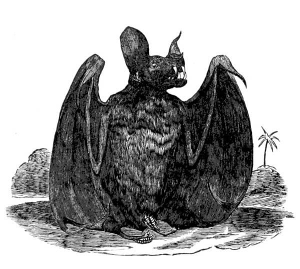 Wall Art - Photograph - Vampire Bat, 1866 by British Library
