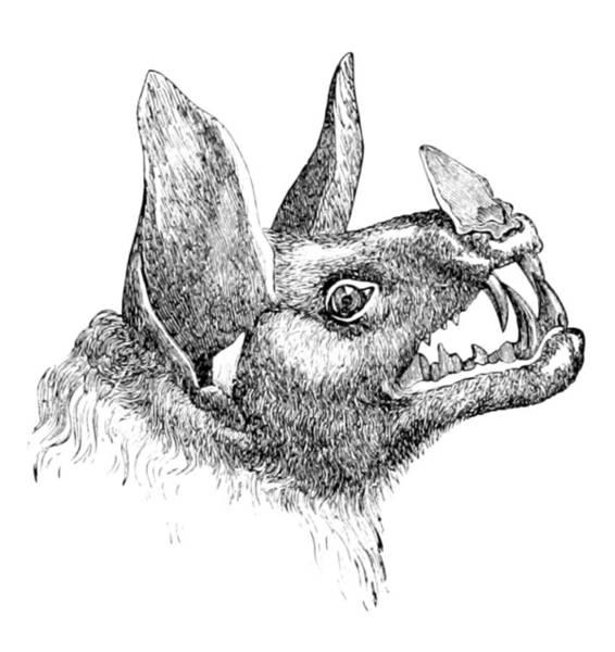 Wall Art - Photograph - Vampire Bat, 1879 by British Library