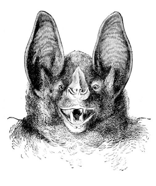 Wall Art - Photograph - Vampire Bat, 1898 by British Library