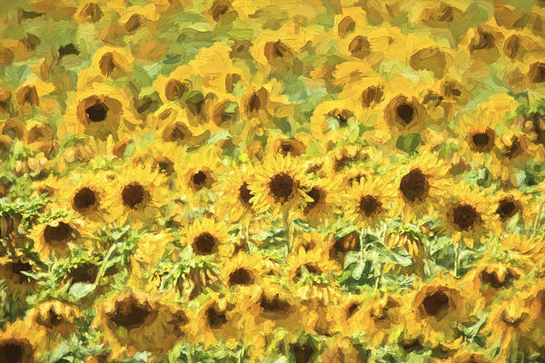 Painting - Van Gogh Sunflowers by David Letts