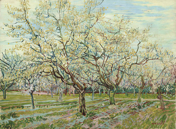 Wall Art - Painting - Van Gogh White Orchard by Granger