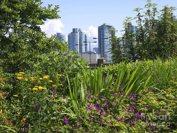 Photograph - Vancouver Garden by Brenda Kean