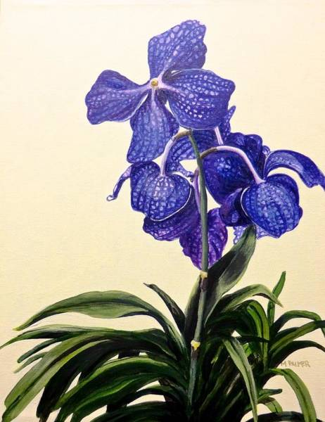 Painting - Vanda Sausai Blue Orchid by Mary Palmer