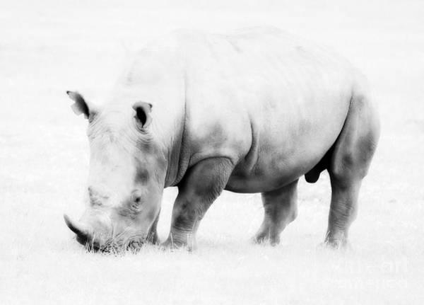 Photograph - Vanishing Species by Chris Scroggins