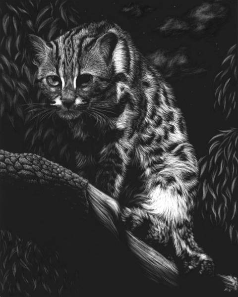 Nocturnal Drawing - Vantage Point by Heather Ward