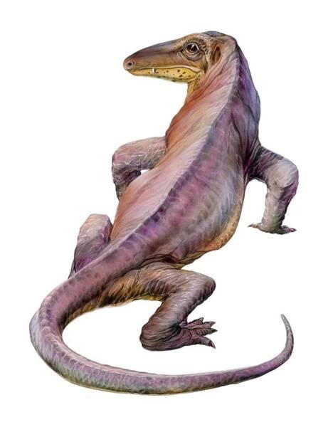 Wall Art - Photograph - Varanosaurus by Michael Long/science Photo Library