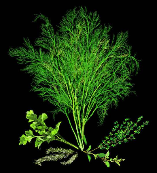 Wall Art - Photograph - Variety Of Fresh Herbs by Ikon Ikon Images