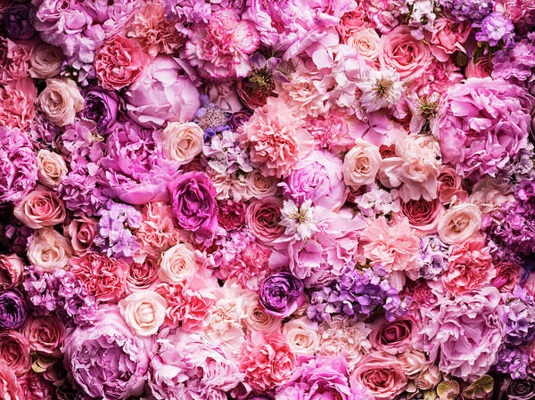 Beauty In Nature Photograph - Various Cut Flowers, Detail by Jonathan Knowles