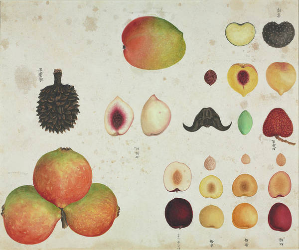 Quince Photograph - Various Fruits by Natural History Museum, London/science Photo Library