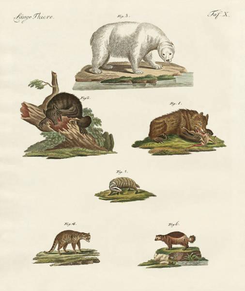 Polar Bear Drawing - Various Kinds Of Bears by Splendid Art Prints