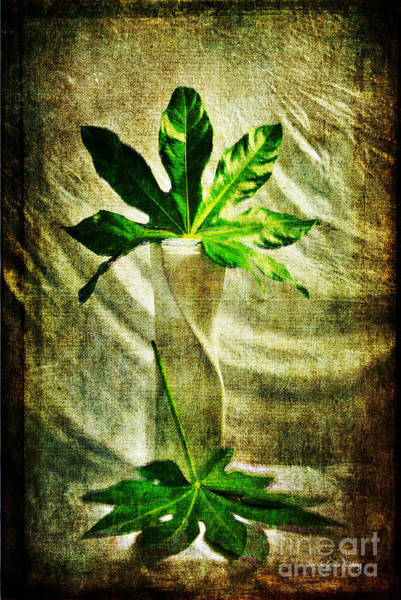 Photograph - Vase And Leaves by Randi Grace Nilsberg