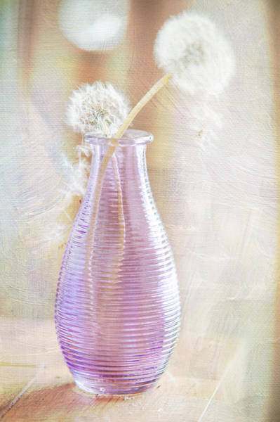 Photograph - Vase With Dandelions by Jenny Rainbow