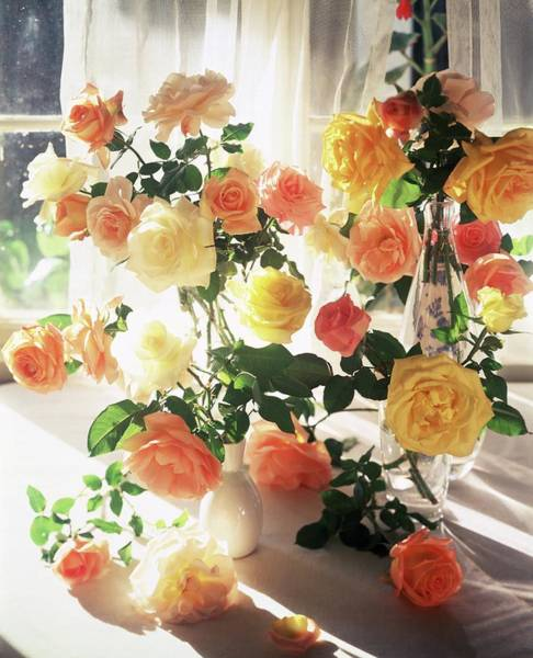 Yellow Flower Photograph - Vases Of Roses by Horst P. Horst