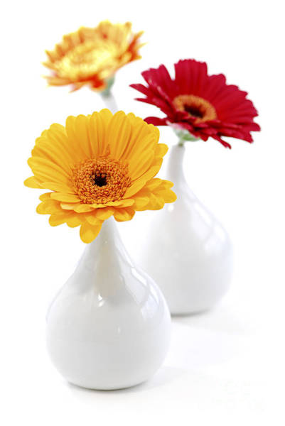 Wall Art - Photograph - Vases With Gerbera Flowers by Elena Elisseeva