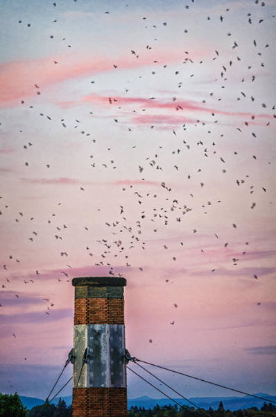 Chimney Swift Wall Art - Photograph - Vaux's Swifts At Chapman by Djambel Unkov