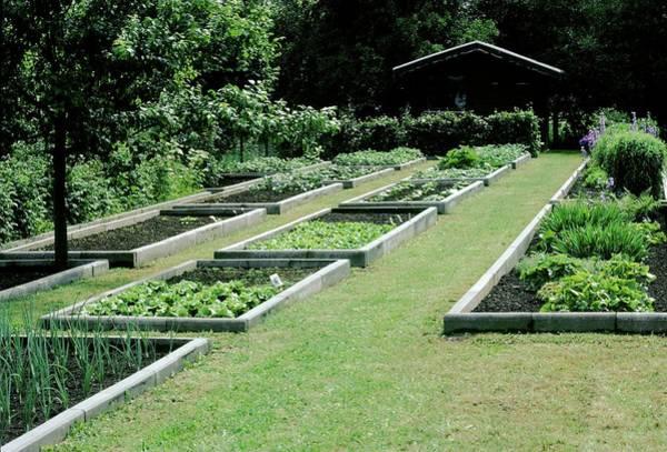 Vegetable Garden Photograph - Vegetable Garden 28. by A C Seinet/science Photo Library
