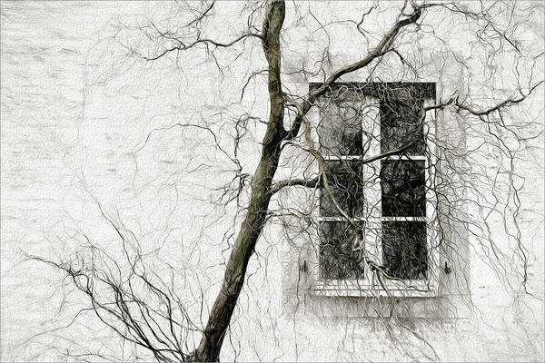 Wall Art - Photograph - Veiled Window by Gilbert Claes