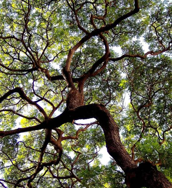 Canopy Photograph - Veins Of Life by Karen Wiles