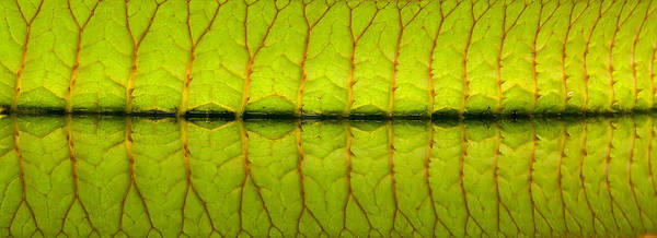 Photograph - Veins by Sean Allen