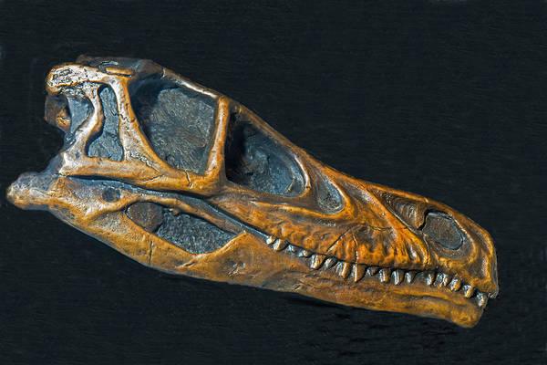 Photograph - Velociraptor Dinosaur Skull by Millard H Sharp
