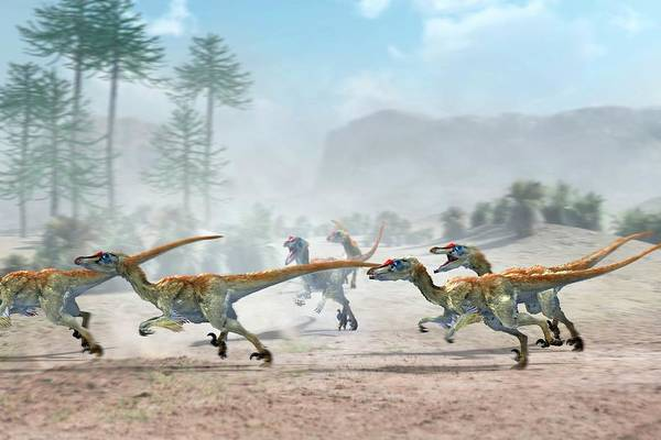 Wall Art - Photograph - Velociraptor Dinosaurs by Jose Antonio PeÑas