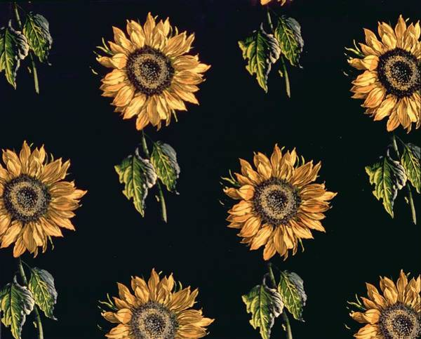 Decorative Drawing - Velours Au Sabre Silk Decoration Of Sunflowers By Maison Ogier And Duplan, Lyon 1894 Textile by French School