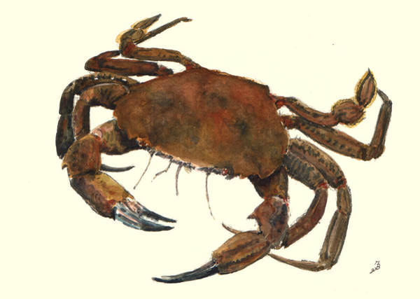 Natur Wall Art - Painting - Velvet Crab by Juan  Bosco